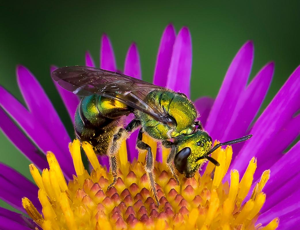 CO2~1~Advanced~Jim~Turner~Little_Green_Pollinator~60