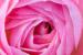 co42advancedpink_rose80