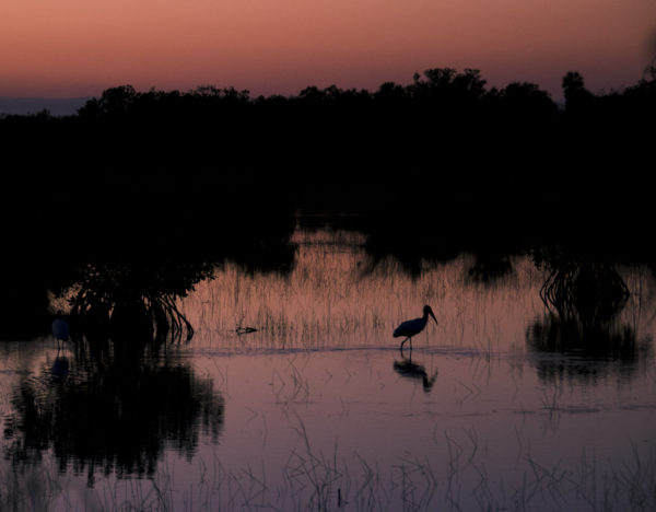 CO4~2~Novice~Quentin~Fisher~Ibis_Fishing_At_Sunset~16
